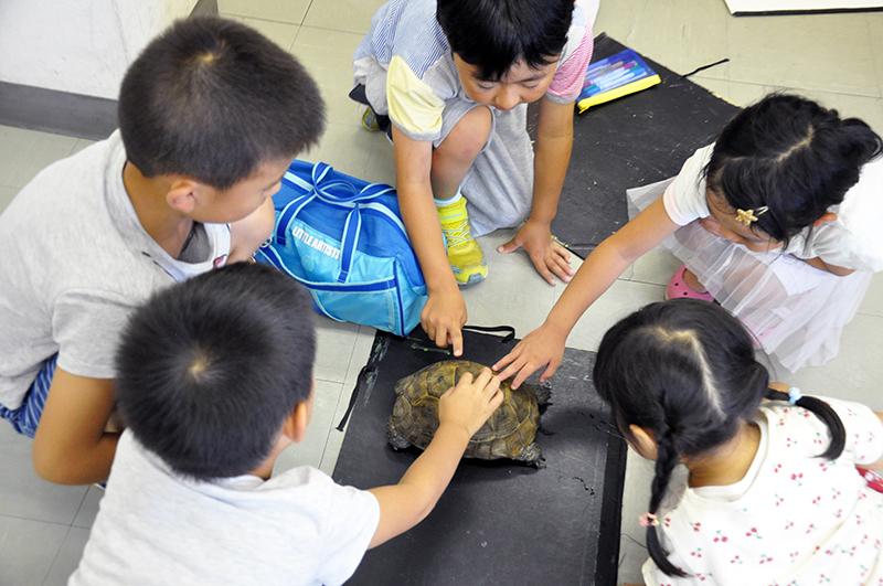 リクガメと卵を写生しよう_b0212226_16300313.jpg