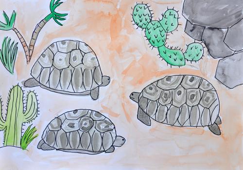 リクガメと卵を写生しよう_b0212226_20523405.jpg