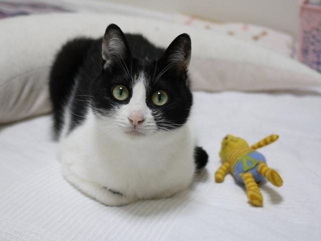 猫のお留守番 ココちゃん編。_a0143140_21375057.jpg