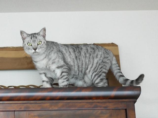 猫のお留守番 ももちゃん編。_a0143140_21595849.jpg