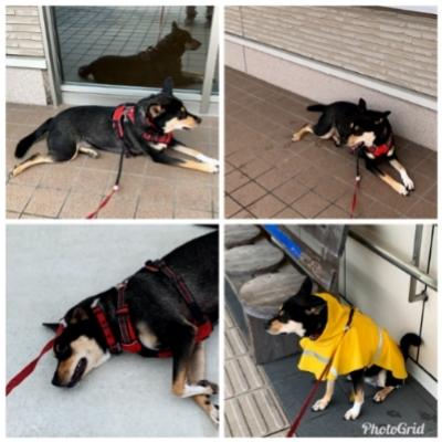 時々お泊まりのリオ(犬)_c0330749_06464829.jpg