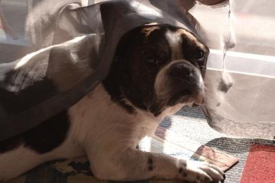 老犬介護の魔法の言葉♪_b0307951_22552767.jpg