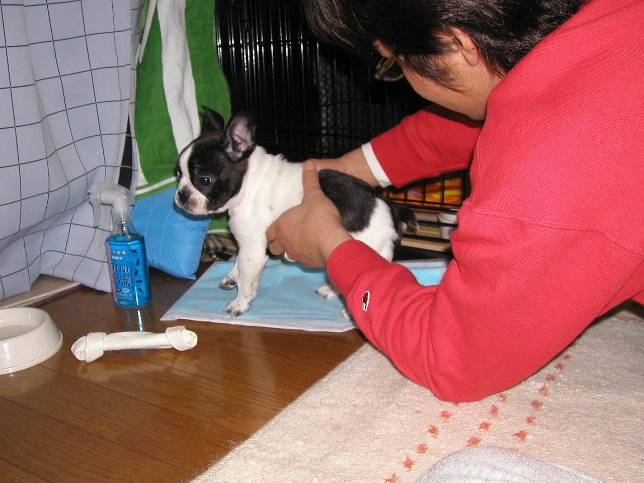 老犬介護の魔法の言葉♪_b0307951_23051143.jpg