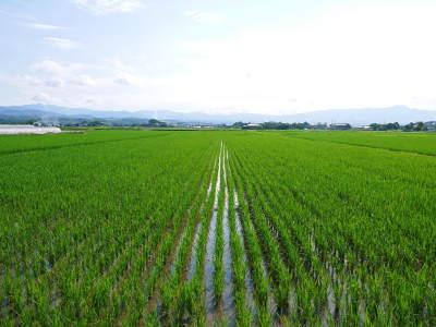 熊本県菊池市七城町『砂田のこだわりれんげ米』 父から子へこだわりの無農薬栽培です。成長の様子2019_a0254656_16545645.jpg