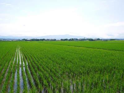 熊本県菊池市七城町『砂田のこだわりれんげ米』 父から子へこだわりの無農薬栽培です。成長の様子2019_a0254656_17025658.jpg
