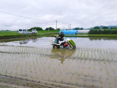 熊本県菊池市七城町『砂田のこだわりれんげ米』 父から子へこだわりの無農薬栽培です。成長の様子2019_a0254656_17143732.jpg