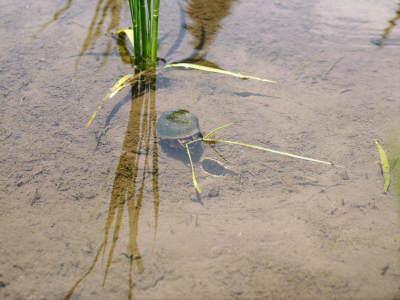 熊本県菊池市七城町『砂田のこだわりれんげ米』 父から子へこだわりの無農薬栽培です。成長の様子2019_a0254656_17230645.jpg