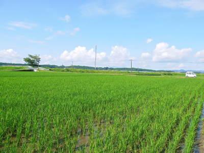 熊本県菊池市七城町『砂田のこだわりれんげ米』 父から子へこだわりの無農薬栽培です。成長の様子2019_a0254656_17252984.jpg