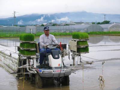 熊本県菊池市七城町『砂田のこだわりれんげ米』 父から子へこだわりの無農薬栽培です。成長の様子2019_a0254656_17311032.jpg
