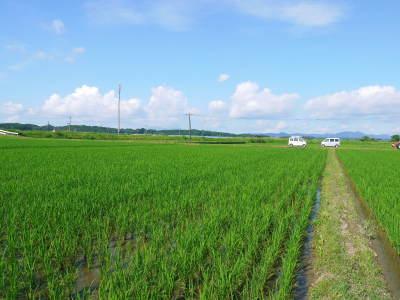 熊本県菊池市七城町『砂田のこだわりれんげ米』 父から子へこだわりの無農薬栽培です。成長の様子2019_a0254656_17525277.jpg