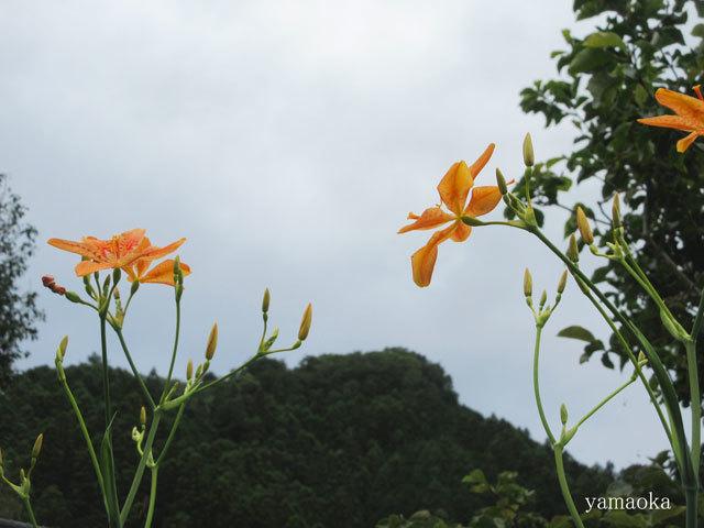 俳誌「橘」五百号記念大会_f0071480_17550721.jpg