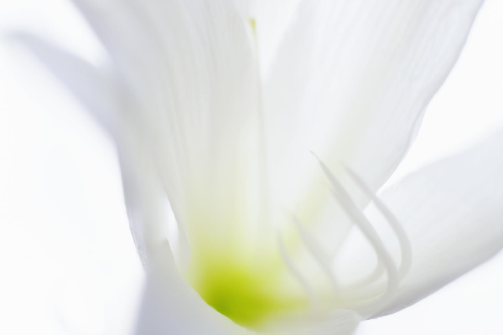 百合の花(その2)_e0367501_16391834.jpg