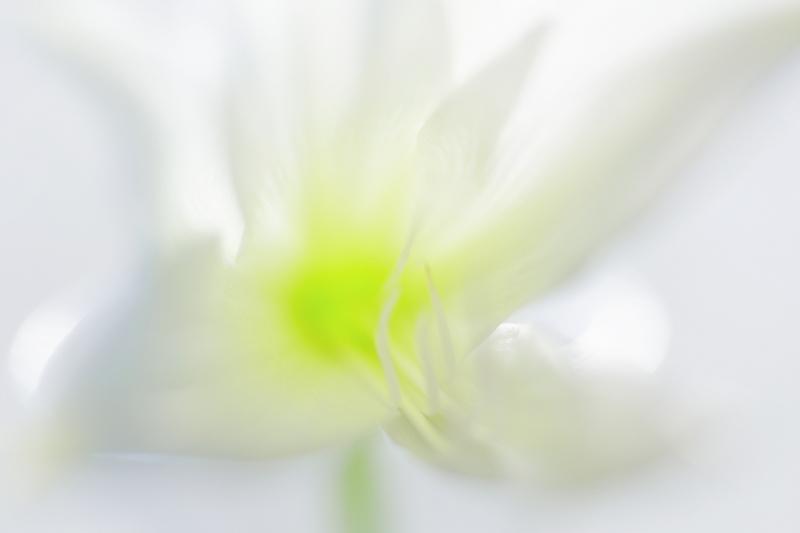 百合の花(その4)_e0367501_19522668.jpg