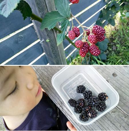 雑木の庭 初夏の庭仕事_d0080906_11143412.jpg