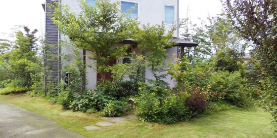 雑木の庭 初夏の庭仕事_d0080906_11143509.jpg