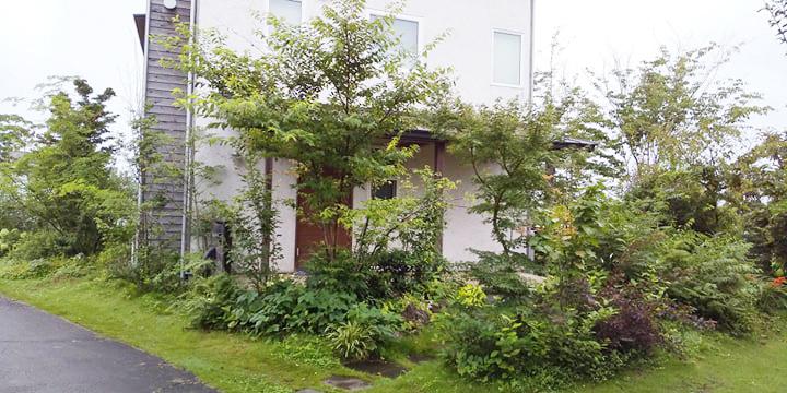 雑木の庭 初夏の庭仕事_d0080906_11143594.jpg