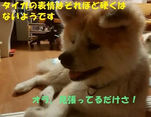 f0121712_22495101.jpg