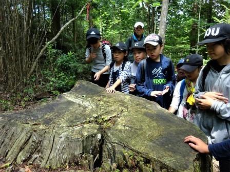 自然観察案内(森林教室) 豊川市立御油小学校_d0105723_21044109.jpg