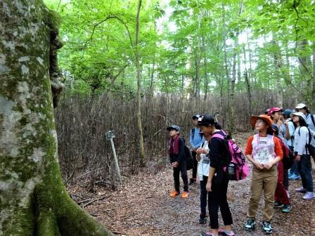 自然観察案内(森林教室) 豊川市立御油小学校_d0105723_21051554.jpg