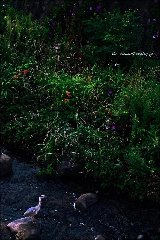 夏の河原_f0315034_15530256.jpg