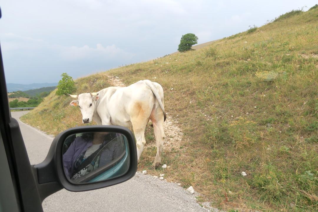 道端で牛・馬くつろぐクッコ山_f0234936_7133446.jpg