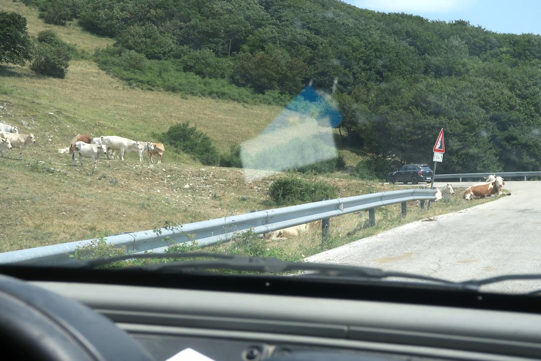 道端で牛・馬くつろぐクッコ山_f0234936_753777.jpg