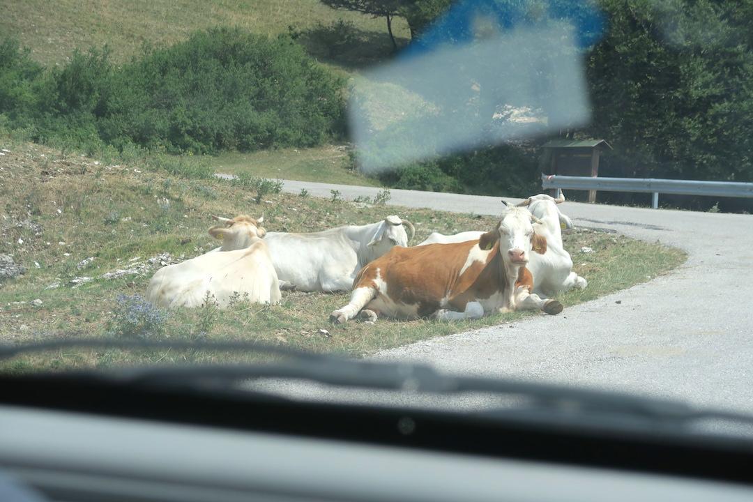 道端で牛・馬くつろぐクッコ山_f0234936_79534.jpg