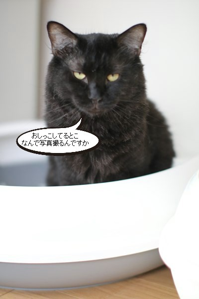 ただ今、トイレ使用中と里親様便り_e0151545_21214037.jpg