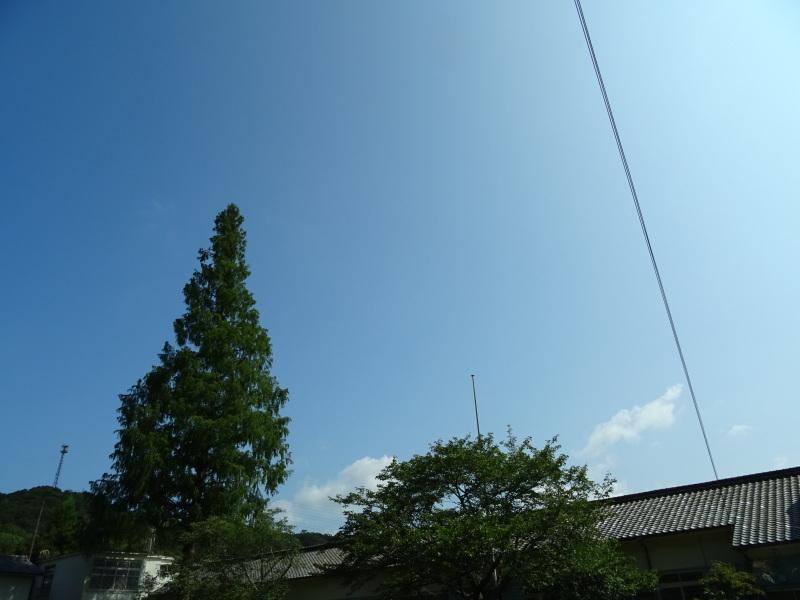 猛暑日は作業なし・・・孝子の森_c0108460_15452529.jpg
