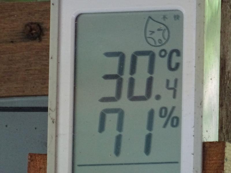 猛暑日は作業なし・・・孝子の森_c0108460_15452586.jpg