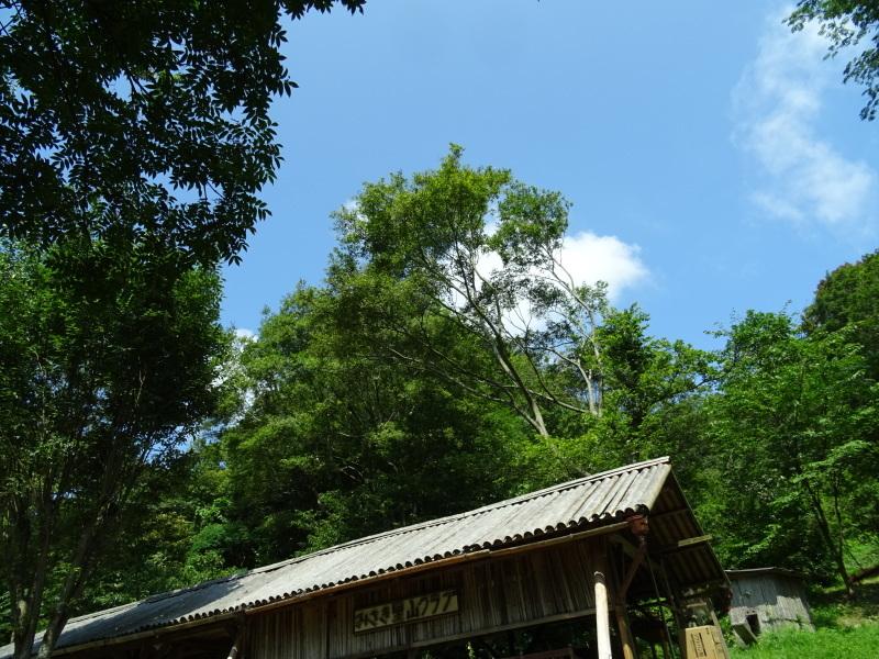 猛暑日は作業なし・・・孝子の森_c0108460_15463142.jpg