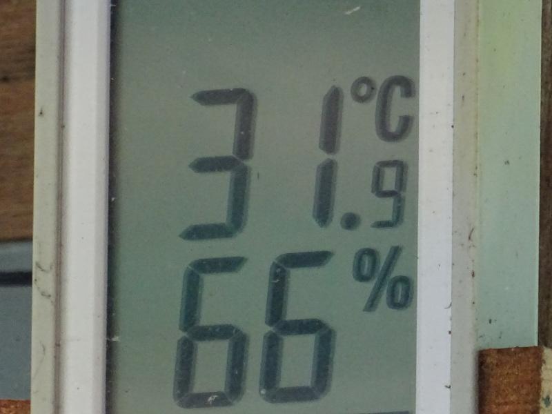 猛暑日は作業なし・・・孝子の森_c0108460_15500556.jpg