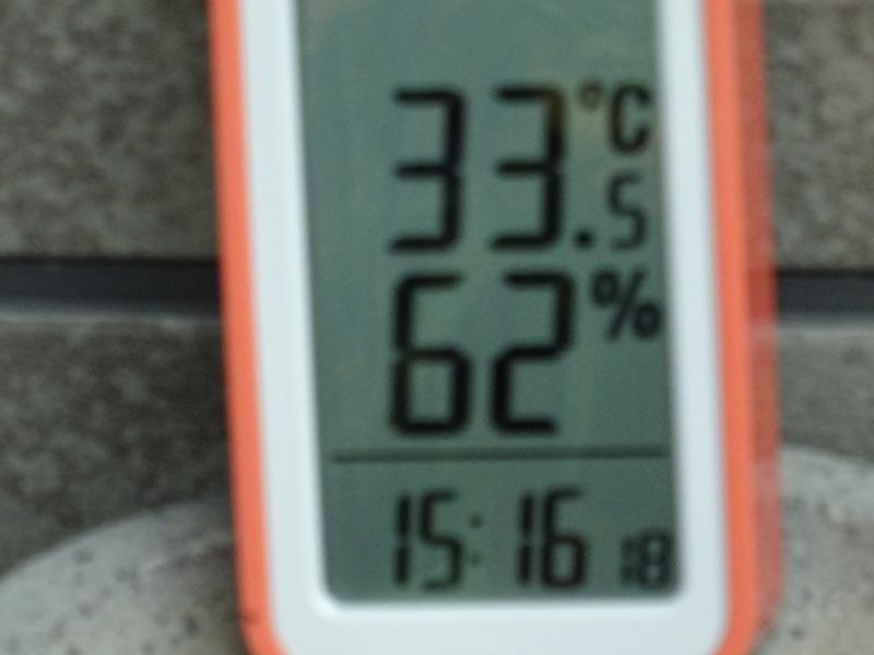 猛暑日は作業なし・・・孝子の森_c0108460_15541253.jpg