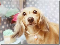 ペットについて考える 犬、猫達と漢方 第四回_b0328361_17044568.png