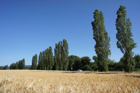 寒暖の差が大きいドイツの夏_c0192161_20065916.jpg