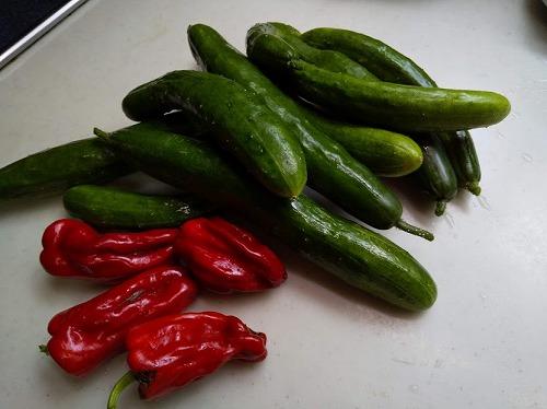 あっという間に大きくなった野菜。_a0331562_15471829.jpg