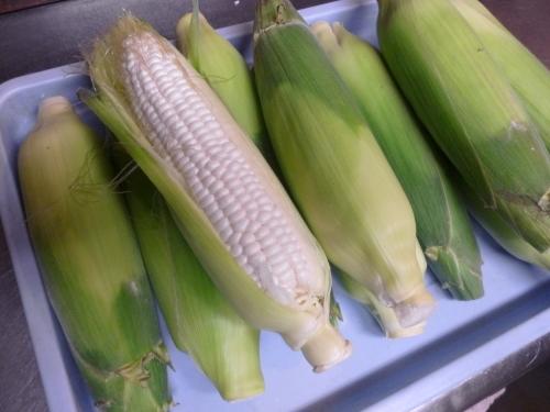 夏は野菜が!_e0252966_12564233.jpg