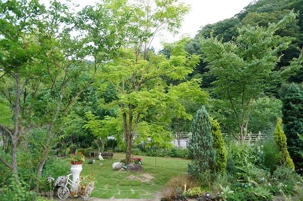 夕方のお庭_e0365880_20024406.jpg