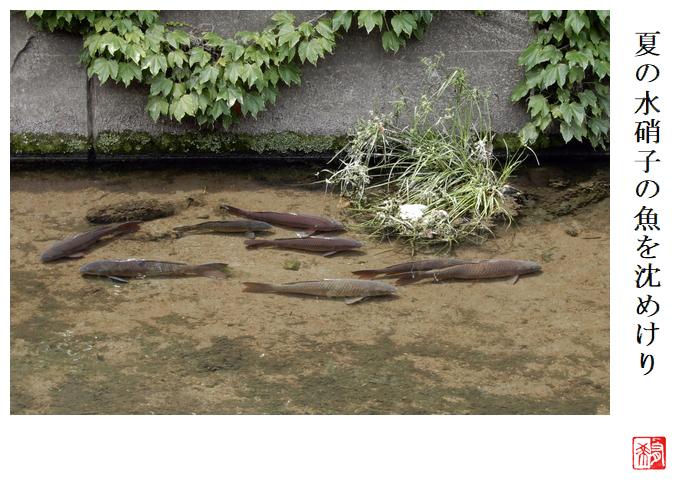 夏の水硝子の魚を沈めけり_a0248481_19514489.jpg
