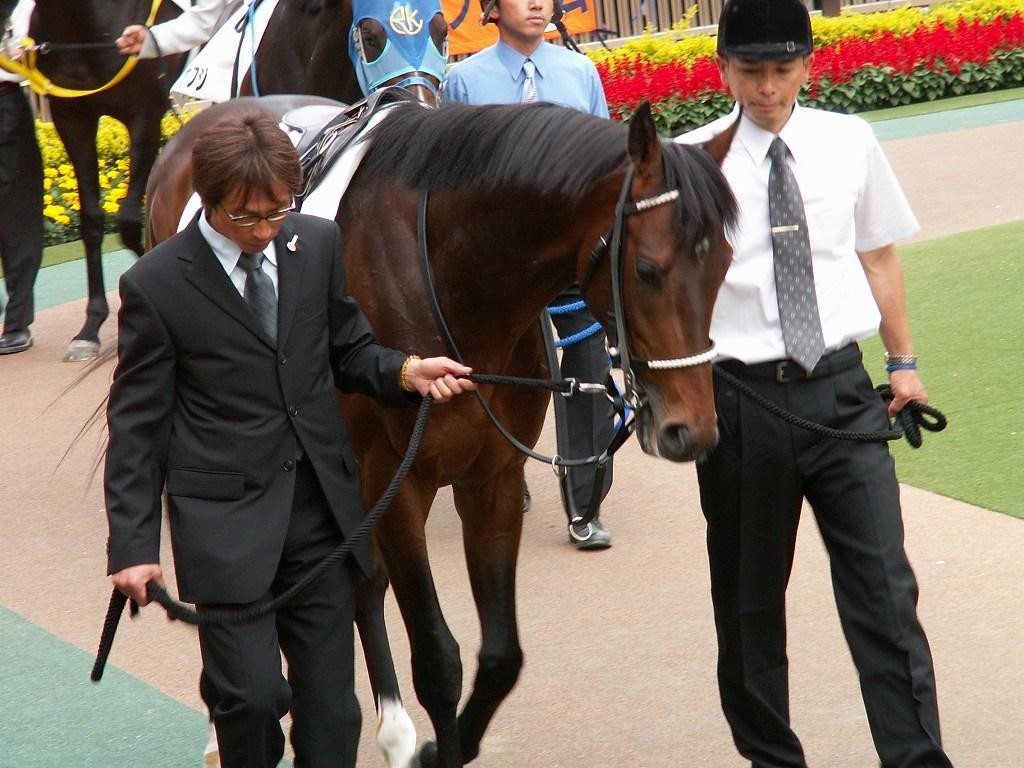 世界に衝撃を与えた日本競馬史上最強の名馬、ディープインパクト逝く_b0015386_23083680.jpg
