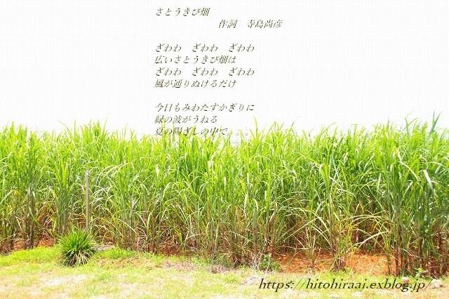 沖縄旅行 読谷村 「島やさい食堂てぃーあんだ」とさとうきび畑_f0374092_17022297.jpg