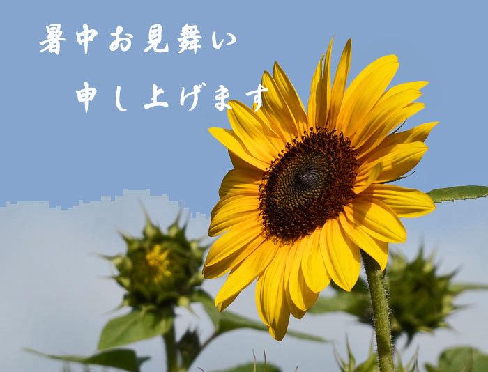 暑中お見舞い_d0162994_12310075.jpg