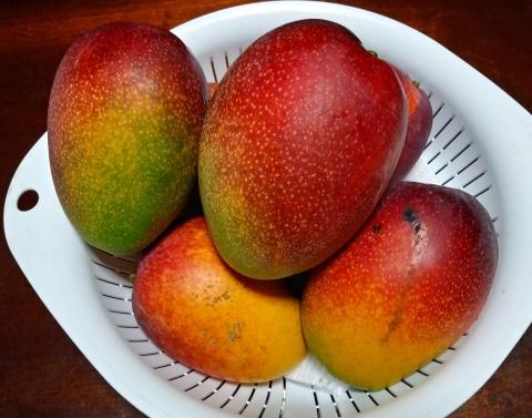SINQにマンゴーをお届け_b0028299_22053218.jpg