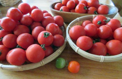 トマト、トマト、トマト. . . 。_e0341401_04495820.jpg