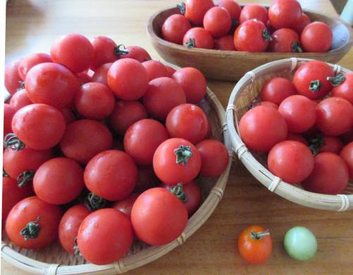 トマト、トマト、トマト. . . 。_e0341401_04500617.jpg