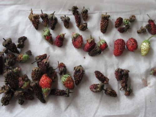 Berry,  Berry,  Berry. . . .。_e0341401_05370440.jpg