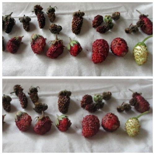 Berry,  Berry,  Berry. . . .。_e0341401_05380950.jpg