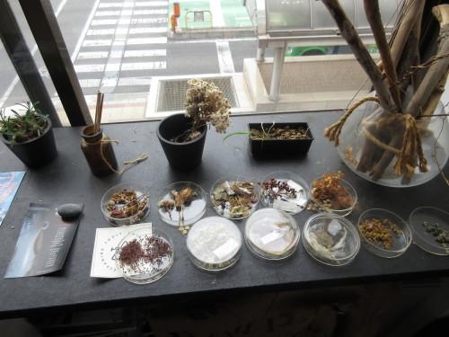 初めて入ったカフェは、植物だらけ。_e0341401_08005291.jpg