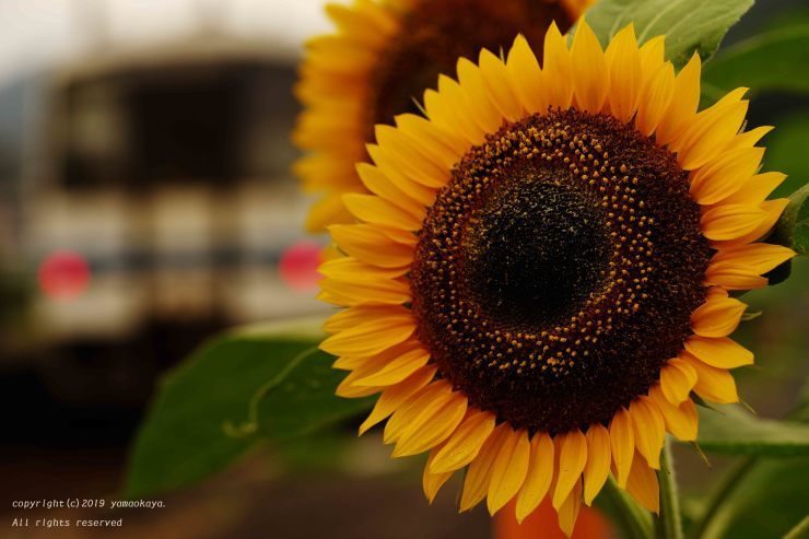 陽の当たらない_d0309612_23213587.jpg