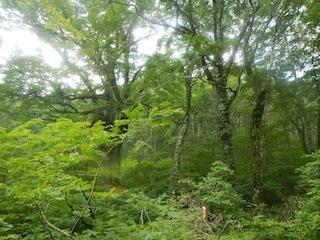 「樹林の山旅」の樹林を目指して…温見川支流赤谷_c0359615_22284280.jpg